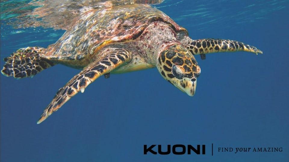 Progress Film Company Kuoni treatment pitch Genero